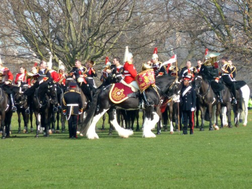 London Hyde Park Drum Horse with Household Cavalry