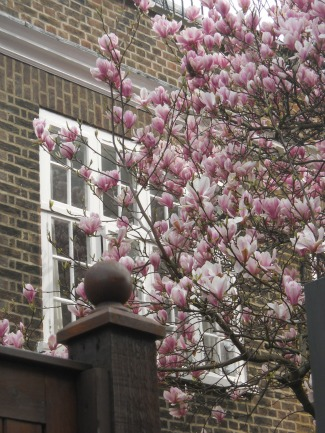 Spring Blossoms in Chelsea London Perfect Vacation Rentals