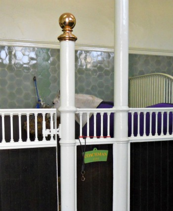 Royal Mews Buckingham Palace London Horses