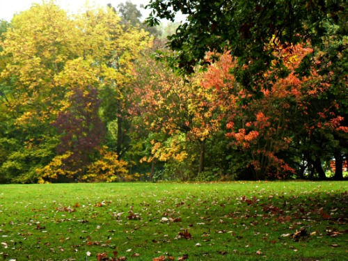 Autumn at Alexandra Park in London