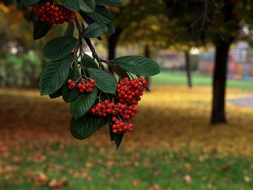 Autumn Walk in London