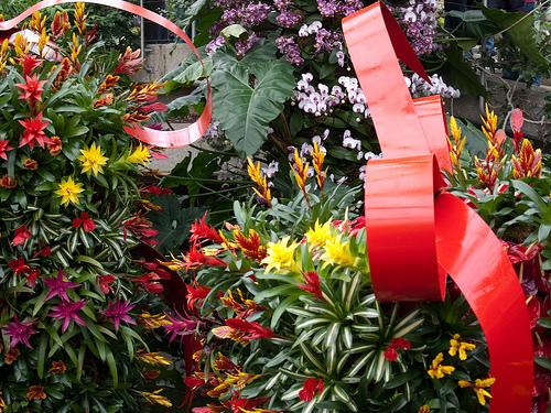 Tropical Extravaganza Display at Kew Gardens