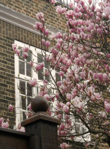 Spring Blossoms in Chelsea
