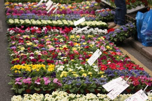 London Columbia Road Market Flowers