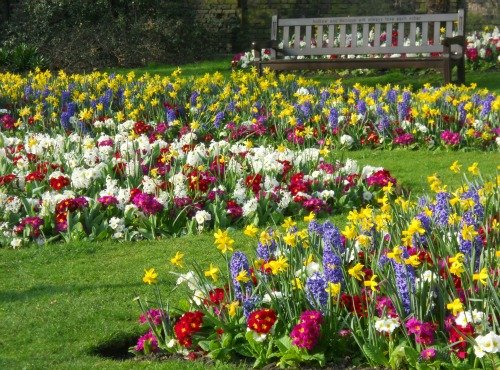 Spring Flowers Kensington London
