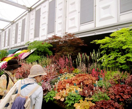 Chelsea Flower Show in London