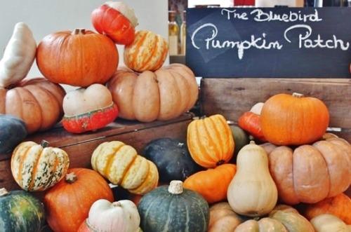 Bluebird Pumpkin Patch Chelsea London