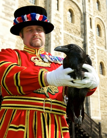 Historic Royal Palaces Raven Master Tower of London