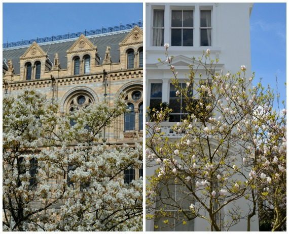 South Kensington Spring Blooms London