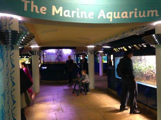 Under the Palm House lies the Marine Aquarium and some mangrove trees.