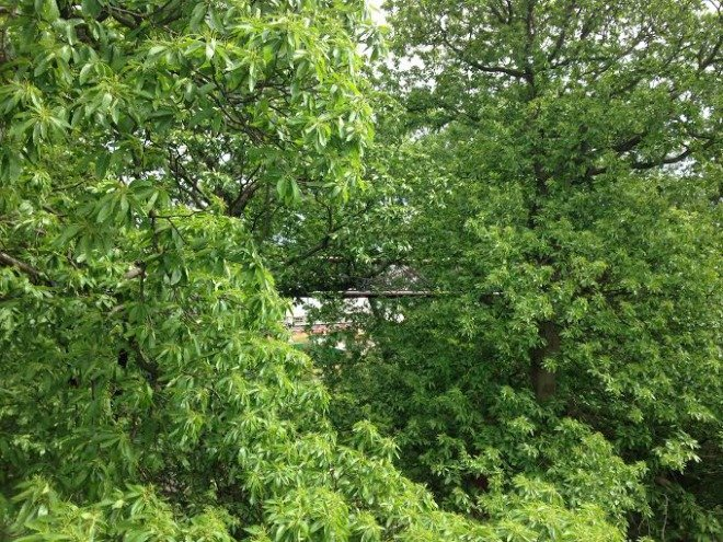 Not for those with vertigo, a tree-top walkway that sways in the wind!