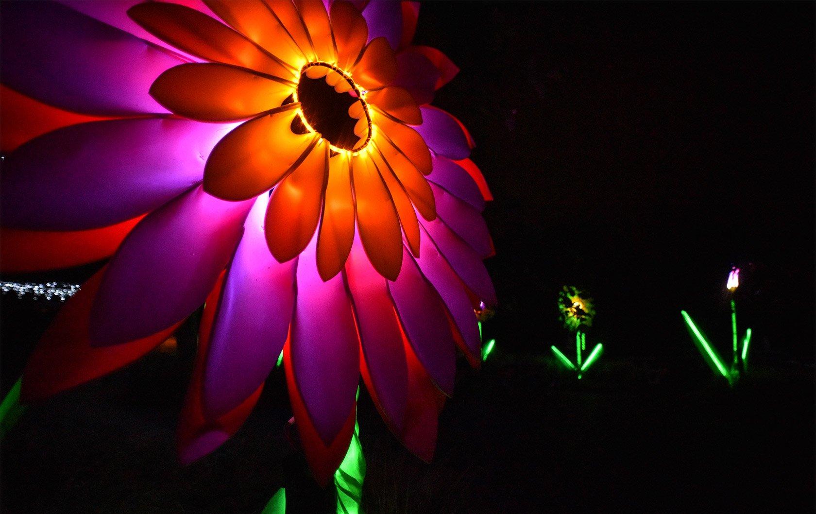 Lantern-Company-Credit-Mark-Loudon