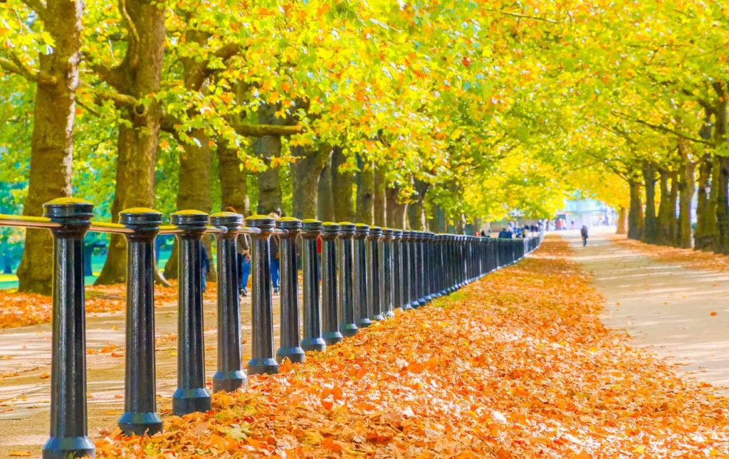 Fall Foliage In London: 6 Places you Must See on your Autumn Trip