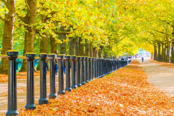 6 Places To See Fall Foliage In London by London Perfect
