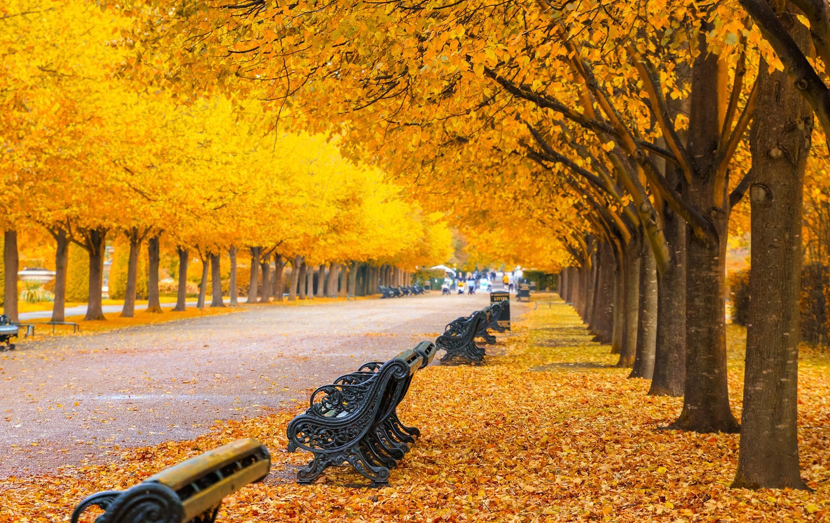 fall foliage in London by London Perfect