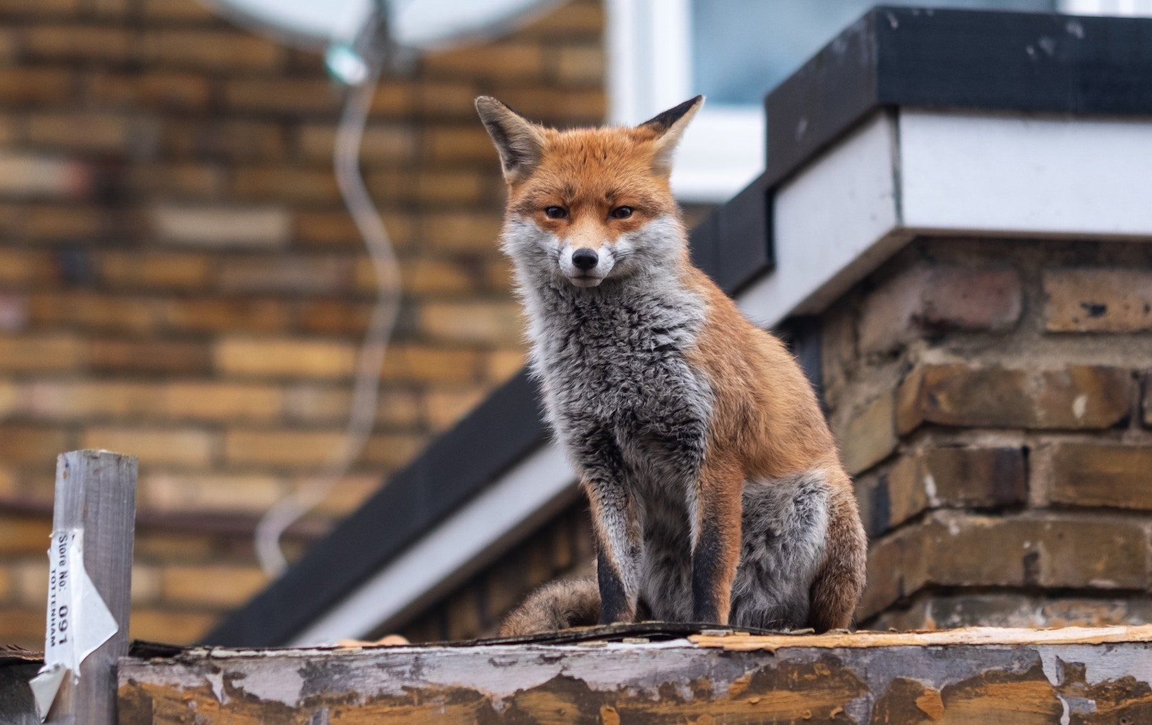 wildlife in London by London Perfect