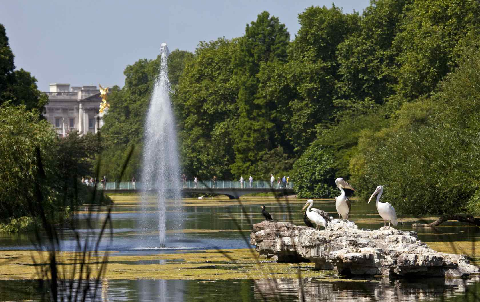 Wild London: Where To Find Wildlife In London