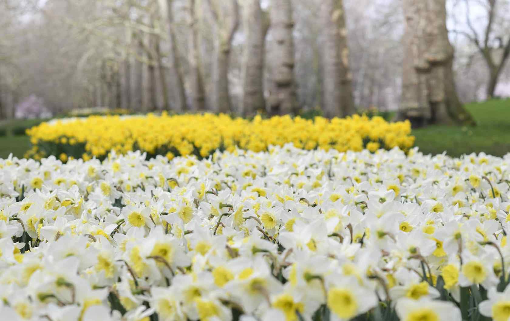 London in spring flowers in park