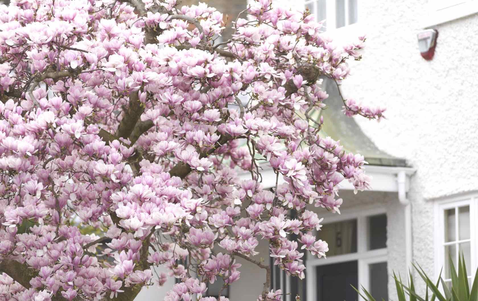 spring in London flowers