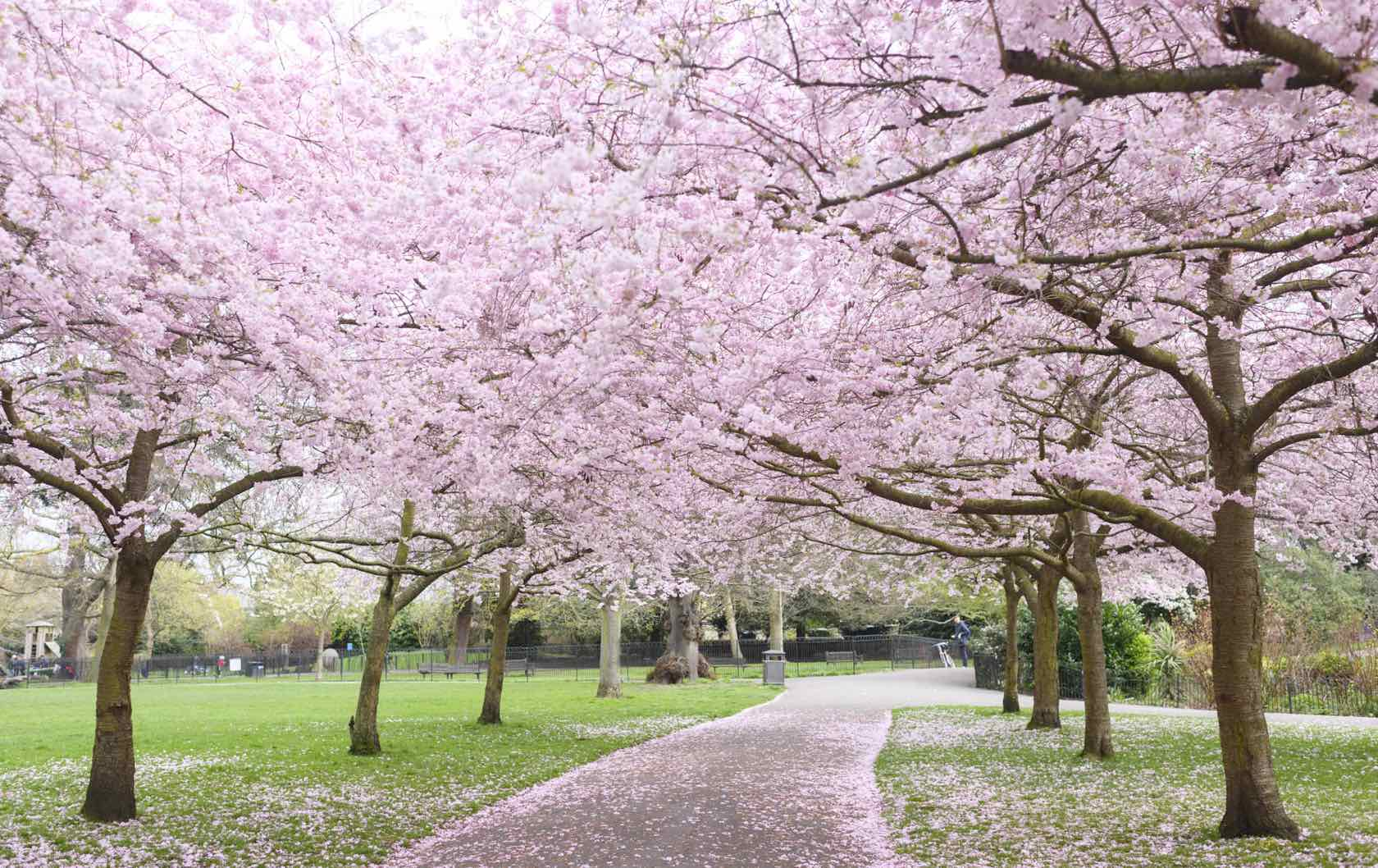 London spring blossoms