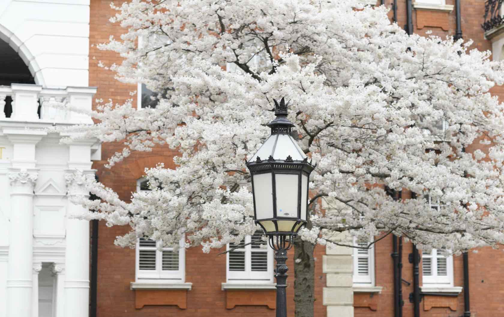 London in Springtime