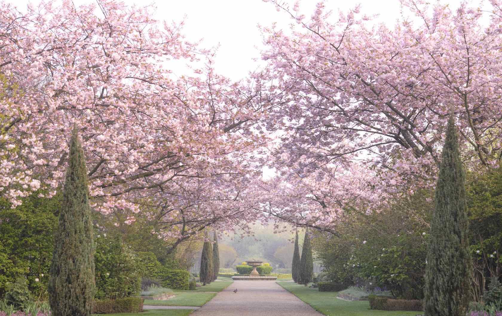 London spring flowering trees