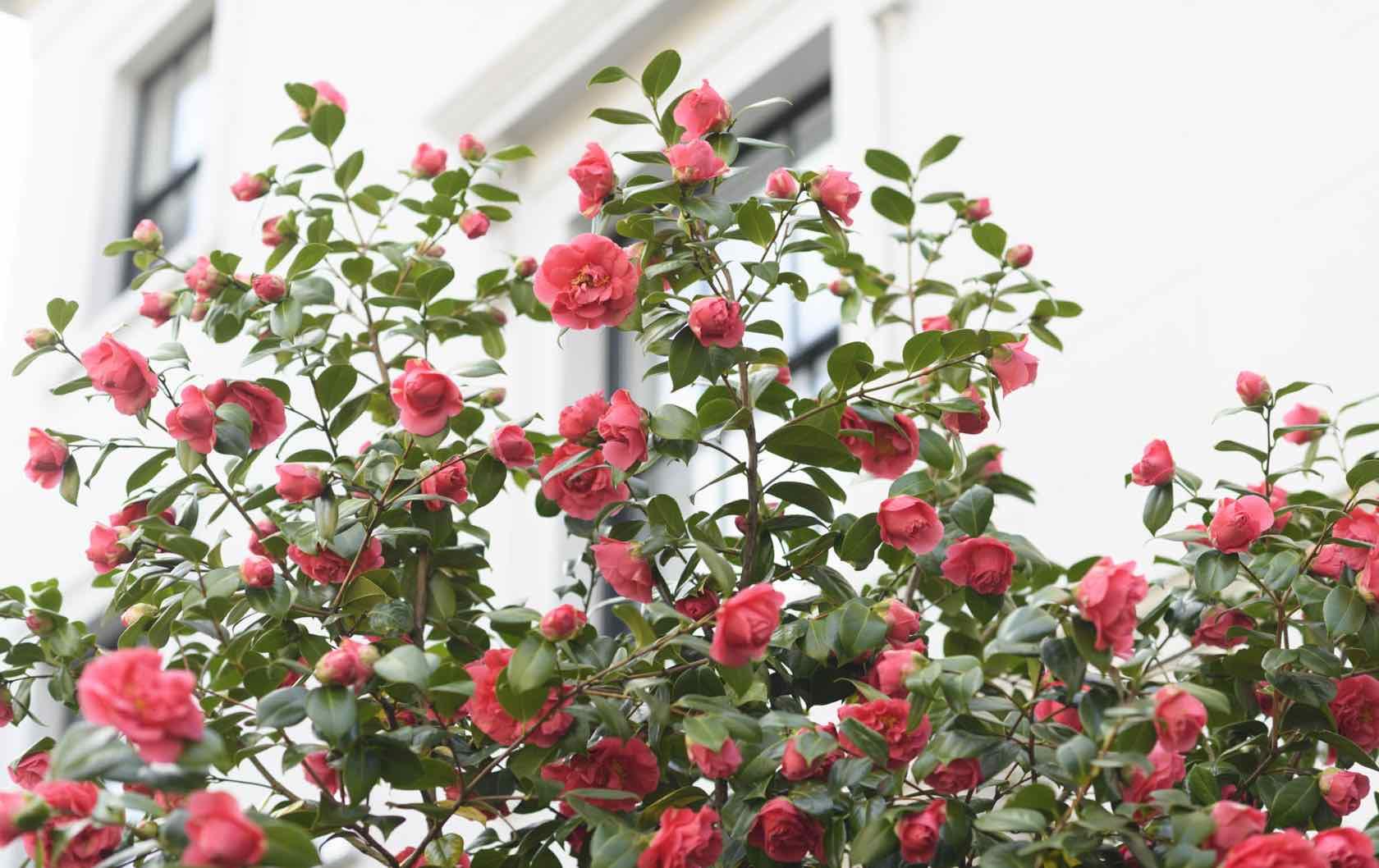 London in spring flowers