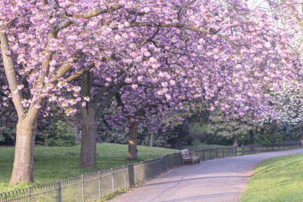spring flowers in London
