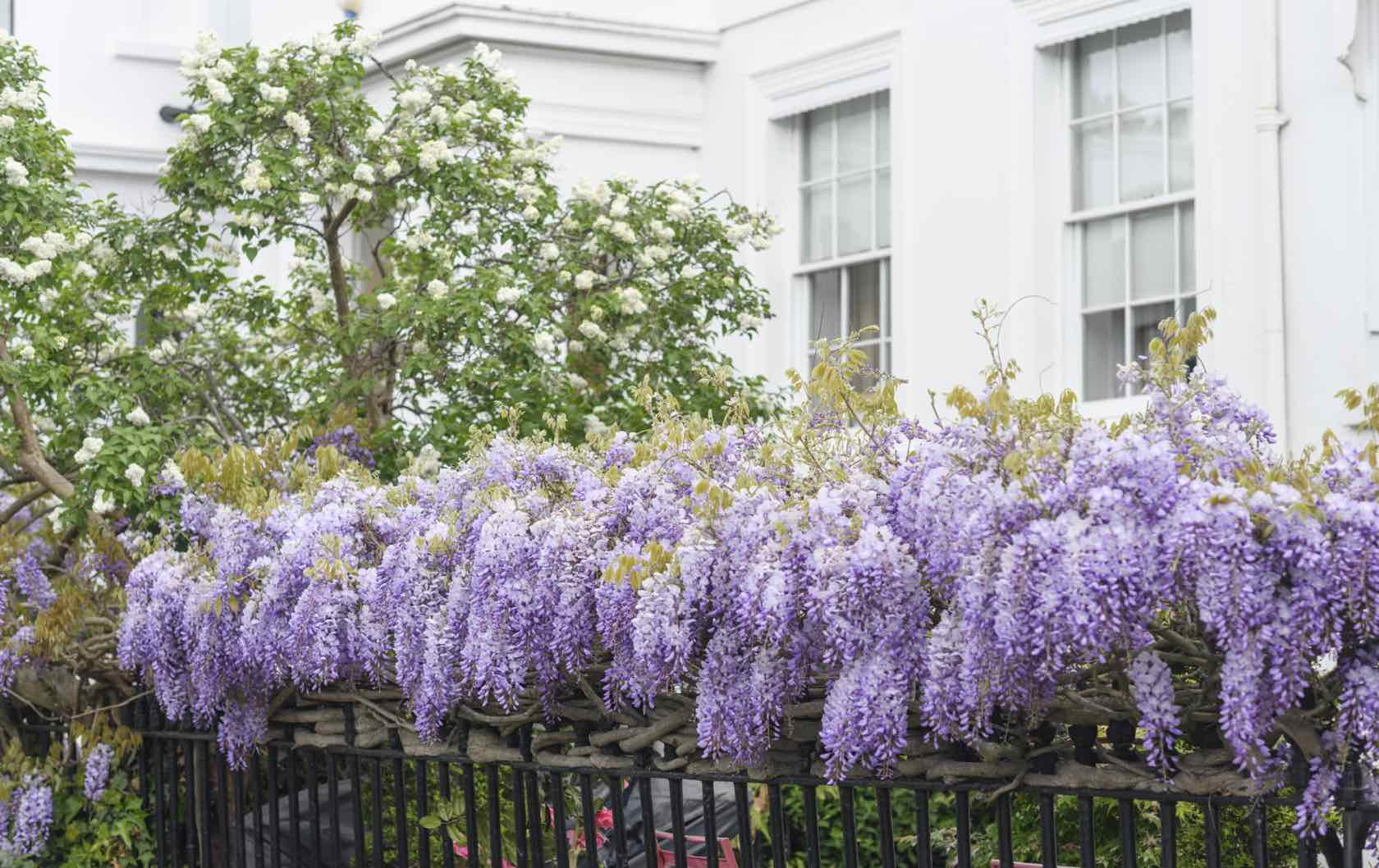 Spring flowers in London
