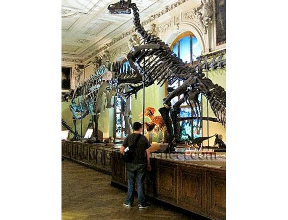 Dinosaurs Natural History Museum