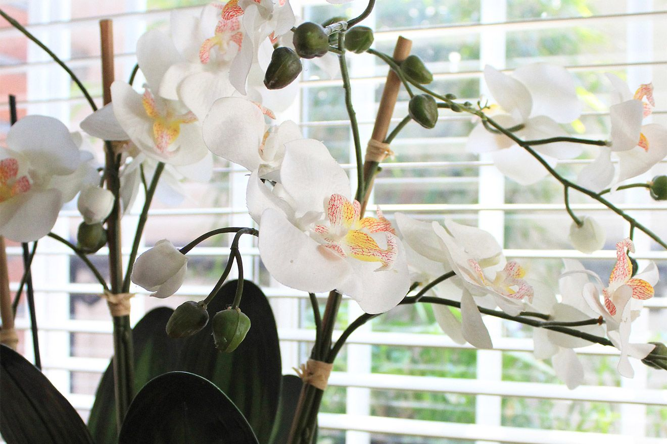Elegant orchid in the second bedroom of the Christchurch vacation rental offered by London Perfect