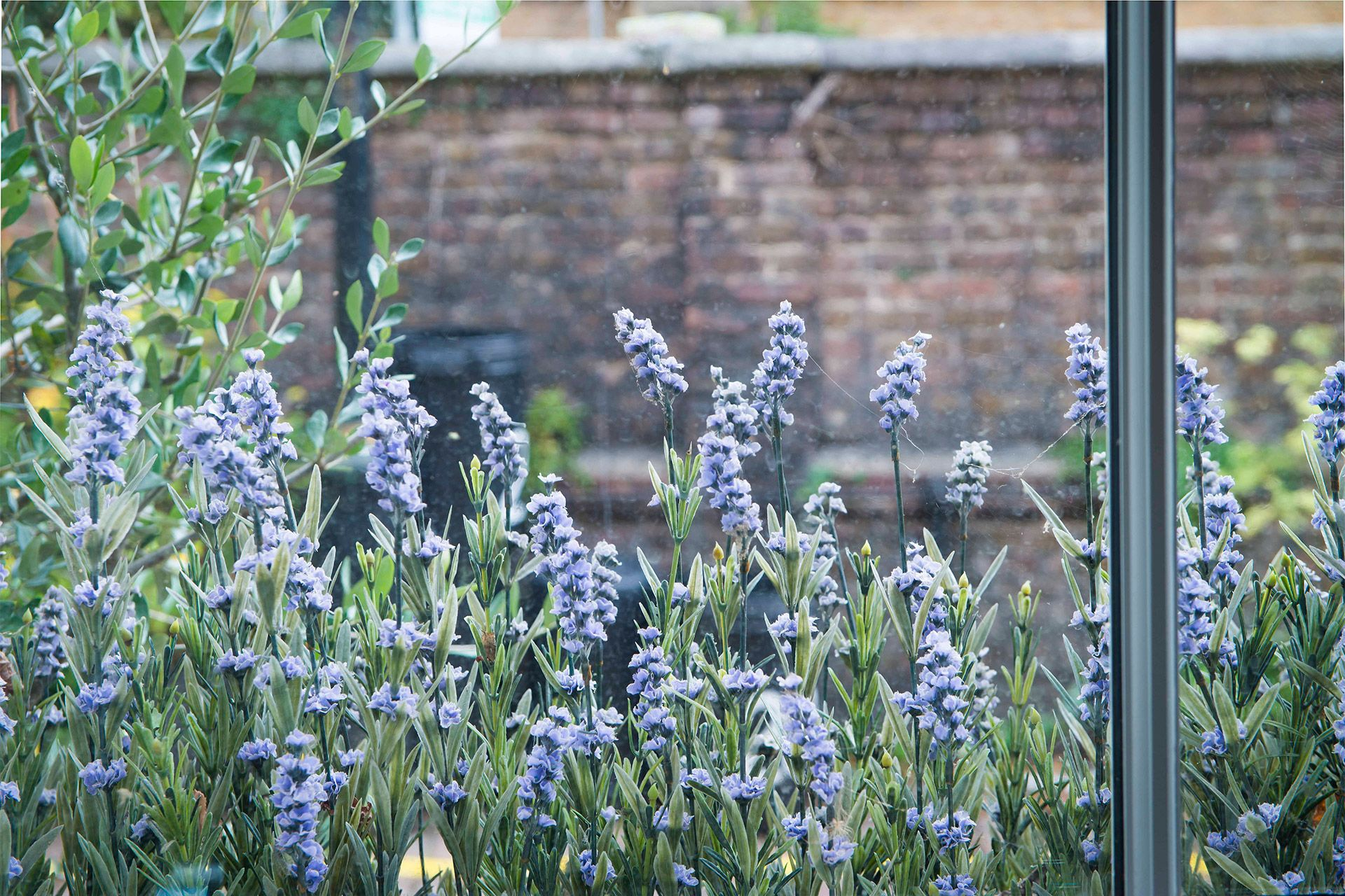 Lavender from the kitchen window of the Eldon vacation rental offered by London Perfect