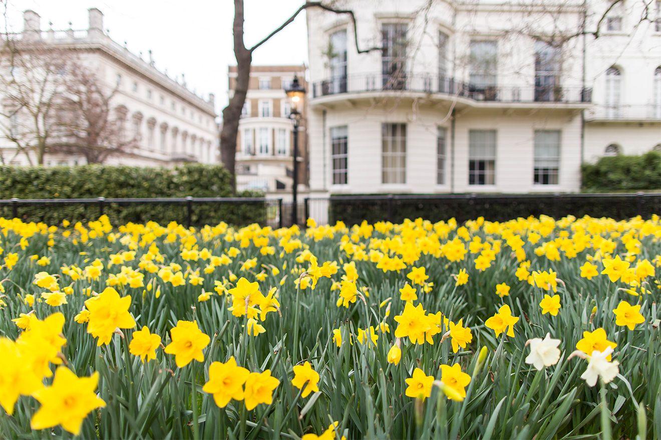 Beautiful gardens in Chelsea London