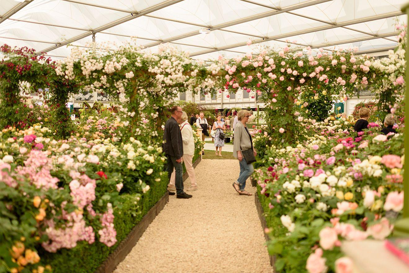 Famous Chelsea Flower Show