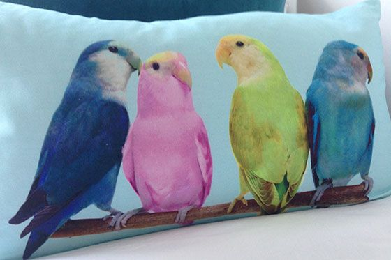 Bright Coloured Bird Cushion in the Austen vacation rental offered by London Perfect